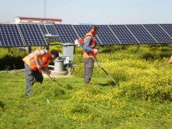 Siega y control de vegetación herbácea